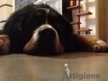 Service Dog -  Dog Sitter e molto altro