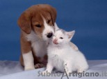 Dog sitter/CAT SITTER