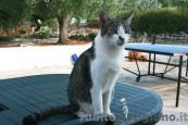 CAT SISTER