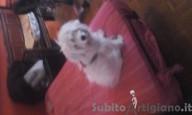 Dog Sitter Cast Sitter